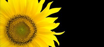 Sunflower background with place for your text Stock Image