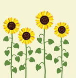 vector sunflower background Stock Photo