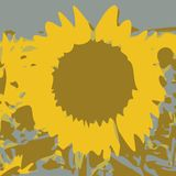 Sunflower background (vector) Royalty Free Stock Images