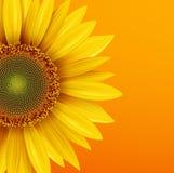 Sunflower background. Yellow flower over orange autumn  background, vector illustration Stock Photo