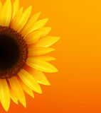 Sunflower background. Yellow flower over orange background, vector illustration Royalty Free Stock Photography