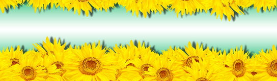 Sunflower banner Stock Photo