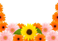 Sunflower and Barberton daisy frame Stock Photo