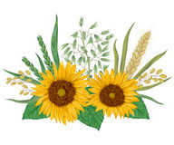 Sunflower, barley, wheat, rye, rice and oat. Collection decorative floral design elements. Stock Photos