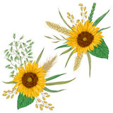 Sunflower, barley, wheat, rye, rice and oat. Collection decorative floral design elements. Stock Image