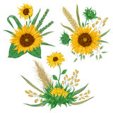 Sunflower, barley, wheat, rye, rice and oat. Collection decorative floral design elements. Royalty Free Stock Photography