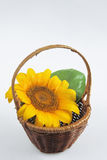 Sunflower in basket Royalty Free Stock Images