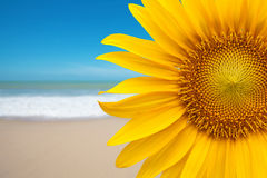 Sunflower on the beach. Details of sunflower on the beach Stock Image