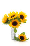 Sunflower Beauty Stock Photos