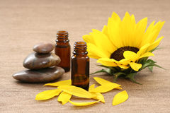 Sunflower beauty treatment Royalty Free Stock Photos