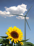 Sunflower with bee in front of a windmill. And a cloud stock image