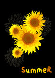 Sunflower on a black background with the text summer Royalty Free Stock Photos