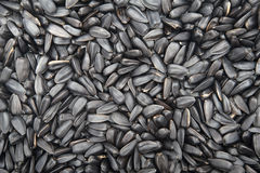 Sunflower black seeds roasted background. Sunflower roasted black roasted seeds Stock Image