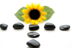 Sunflower with black stones Royalty Free Stock Photography