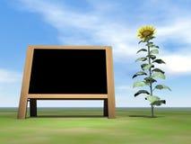 Sunflower blackboard - 3D render Stock Image