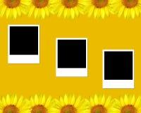 Sunflower, blank photos. Sunflowers and blank photos Royalty Free Stock Photos