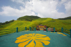 Sunflower bloom in winter. Mae Hong Son Province, Thailand stock photo