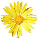 A sunflower Stock Image
