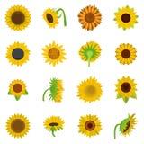 Sunflower blossom icons set isolated. Sunflower blossom icons set. Flat illustration of 16 sunflower blossom icons isolated on white vector illustration