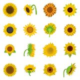 Sunflower blossom icons set vector isolated. Sunflower blossom icons set. Flat illustration of 16 sunflower blossom vector icons isolated on white Stock Photography