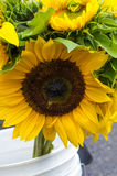 Sunflower blossom at the market Stock Images