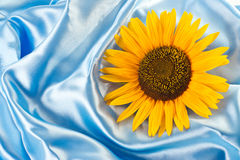 Sunflower on blue satin Royalty Free Stock Image