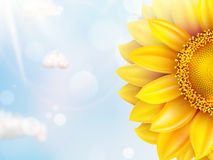 Sunflower with blue sky - autumn. EPS 10 Royalty Free Stock Photo