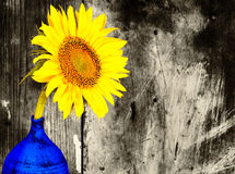 Sunflower on a blue vase with a black and white background Royalty Free Stock Photos