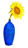 Sunflower on a blue vase isolated on white Stock Photo