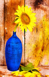 Sunflower on a blue vase with an old wood planks  background Royalty Free Stock Photos