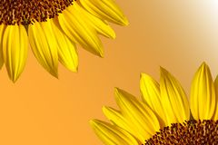 Sunflower border stock photography