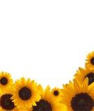 Sunflower border Royalty Free Stock Image