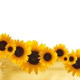 Sunflower border Stock Image