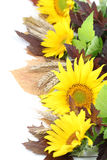 Sunflower border Royalty Free Stock Photo