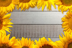 Sunflower Border. White wooden plates and a sunflower border Stock Photography