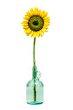 Sunflower in a bottle Stock Photos