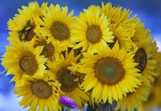 Sunflower bouquet Royalty Free Stock Photo