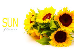 Sunflower bouquet Stock Images