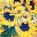 Sunflower bouquet Stock Image