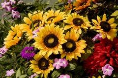 Sunflower Bouquet in Garden Stock Photo