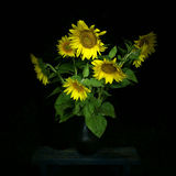 Sunflower bouquet at night Stock Images