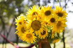 Sunflower bouquet. Over bokeh background Royalty Free Stock Images