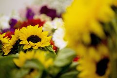 Sunflower bouquets Royalty Free Stock Photos