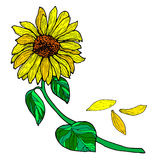 Sunflower on a branch with leaves. vector illustration