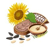 Sunflower, bread with chocolate paste, cocoa, honey and sunflower seeds. Isolated on white. Raster illustration Stock Photos