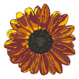 Sunflower in brown colors Royalty Free Stock Photography