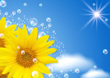 Sunflower and bubbles Royalty Free Stock Photo