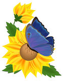 Sunflower and butterfly Royalty Free Stock Images