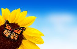 Sunflower butterfly Royalty Free Stock Image