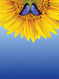 Sunflower and butterfly Royalty Free Stock Photography